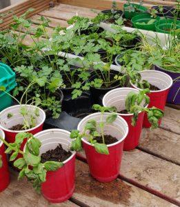 Gardening at Sufra NW London