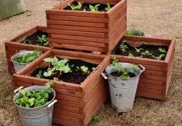 Community Garden - Saving Herbs